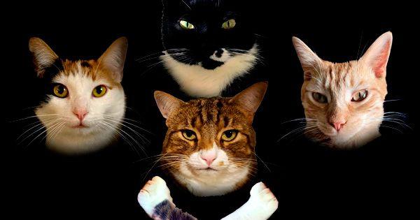 """queen:-cuatro-gatos-versionan-el-""""bohemian-rhapsody"""",-rebautizado-""""bohemian-catsody"""""""